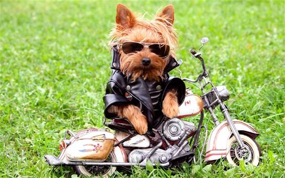 Wallpaper Dog motorcycle riders