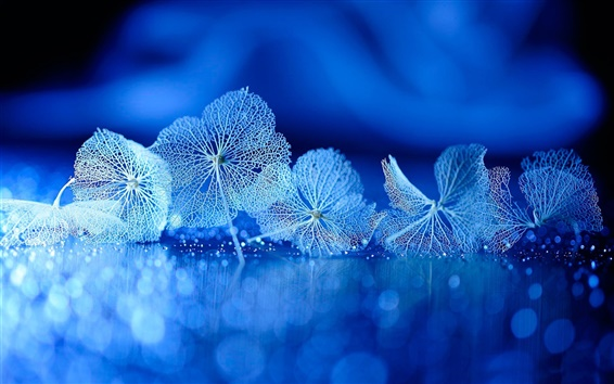 Fond d'écran Les feuilles sèches, veines, réflexion, bleu