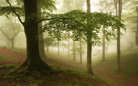 Fond d'écran Brouillard, forêt, arbres
