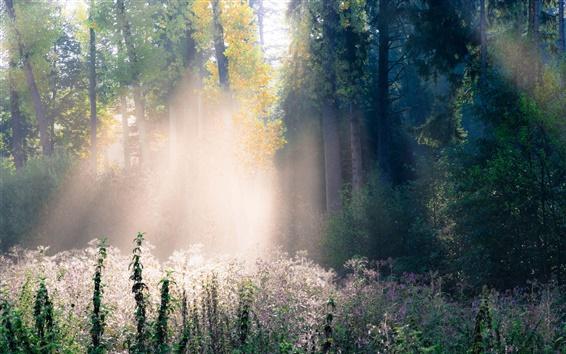 Wallpaper Forest, autumn, fog, grass, trees, rays