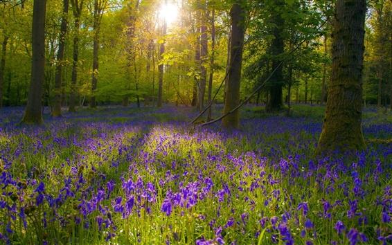 Wallpaper Forest, purple flowers, sunlight, trees