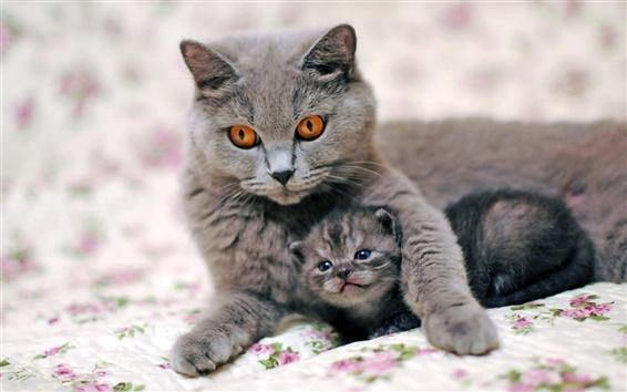 Wallpaper Gray cat mother with kitten