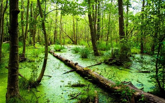 壁紙 緑の森、マーシュ