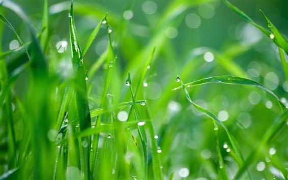 Wallpaper Green grass after rain