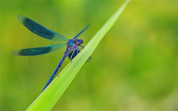 Papéis de Parede Grama verde, folhas, libélula azul