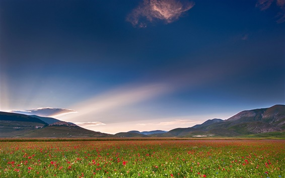 Fondos de pantalla Italia, Umbría, campo de amapolas, cielo, nubes, montañas