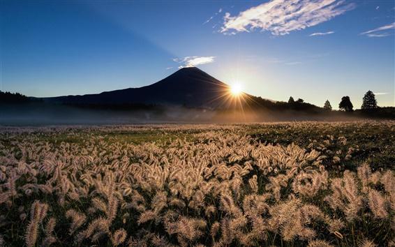Обои Япония, Fuji, горы, трава, солнечные лучи, небо, природа