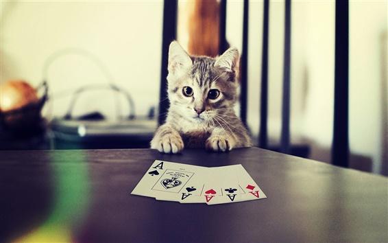 Обои Котенок, играя в покер