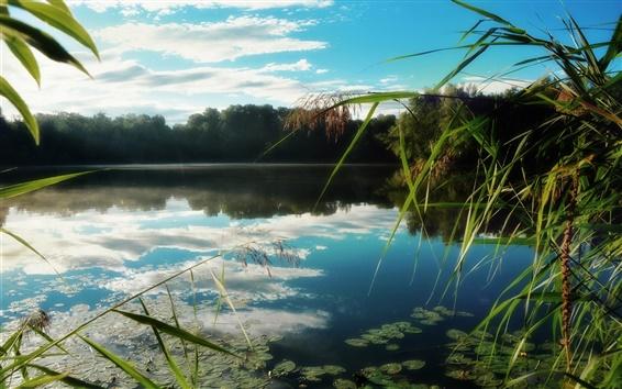 Wallpaper Lake, reeds, water reflection, trees