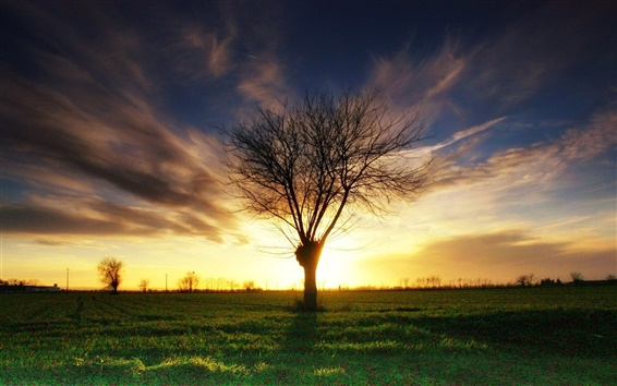 Wallpaper Lonely tree, grass, sunset