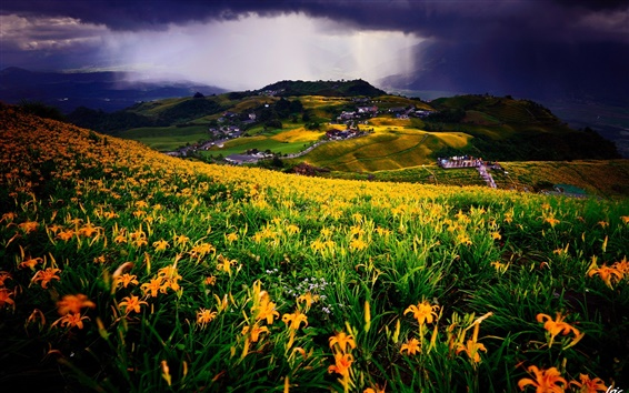 Wallpaper Meadow, flowers field, yellow lilies, village, houses, clouds
