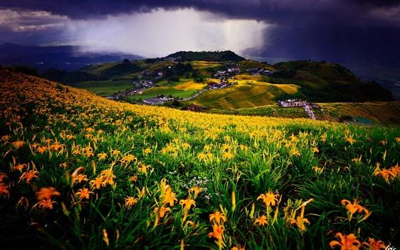 Fond d'écran Meadow, champ de fleurs, des lys jaunes, village, maisons, nuages