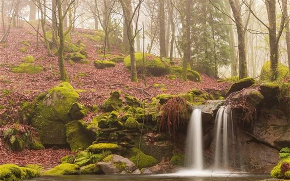 Fond d'écran Forêt du matin, la brume, de la mousse, ruisseau, cascade