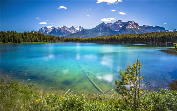 Wallpaper Mountains, forest, lake, water transparency
