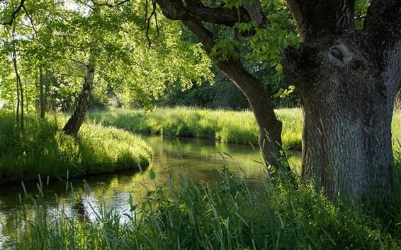 Wallpaper Nature forest, river, summer, green