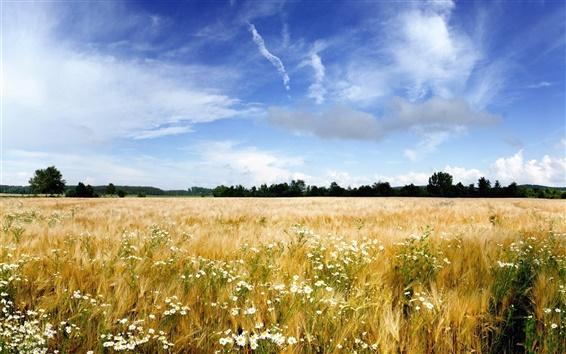 Обои Природа пейзаж, поля, трава, цветы, деревья, небо, облака