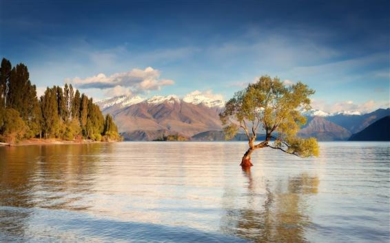Papéis de Parede Nova Zelândia, Ilha do Sul, Lago Wanaka, montanhas, água, árvores