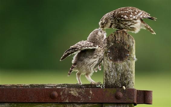 Обои Совы, детское питание птица