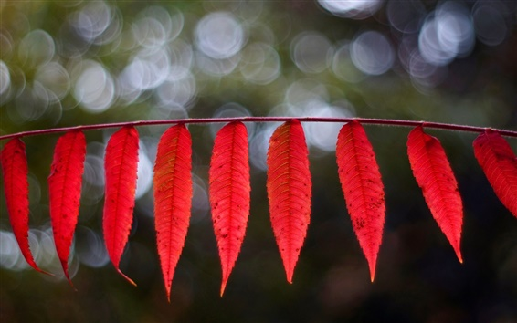 Wallpaper Red elongated leaves, bokeh