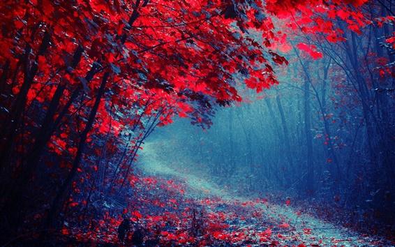 Обои Красные листья лес, дорога, деревья, осень, туман, след
