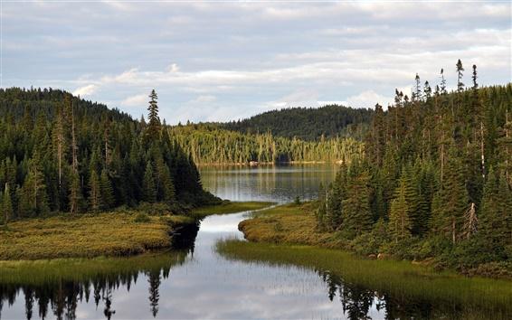 Обои Река, лес, небо, облака, природа пейзаж
