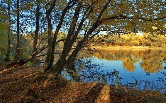 壁紙 川、木、秋、自然の風景