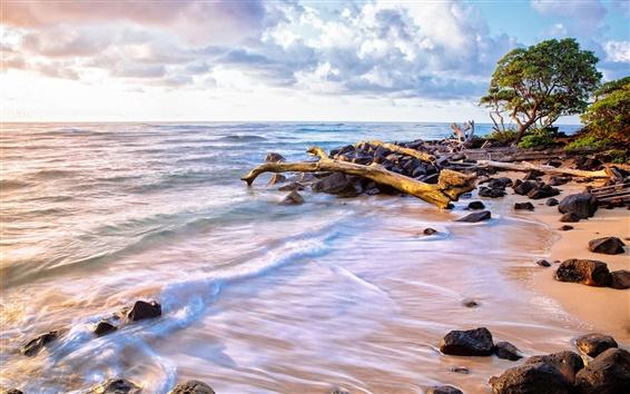 Wallpaper Sea, ocean, water, waves, beach, sand, stones, trees, sky, clouds