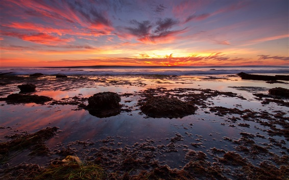 Обои Морской закат, пляж, морские водоросли, красное небо