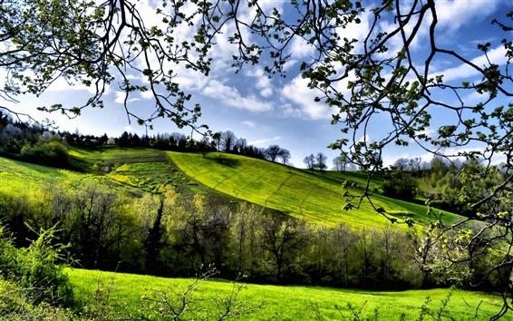 Wallpaper Spring scenery, fields, trees, greenery