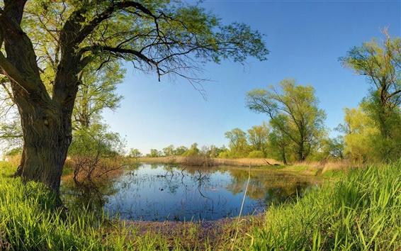 Papéis de Parede Primavera, céu, lago, árvores, grama
