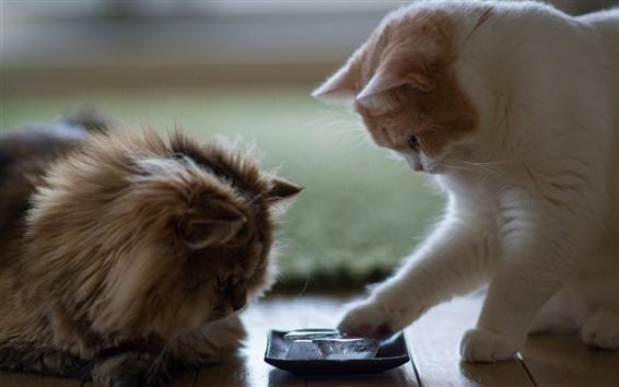 Обои Две кошки играют куски льда