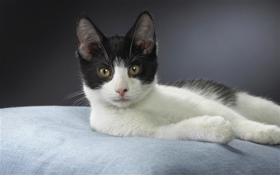 Wallpaper White black kitten close-up