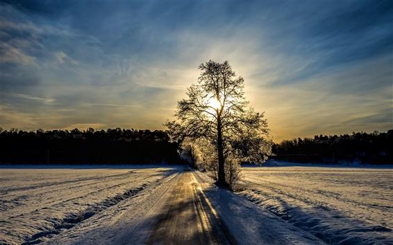 Wallpaper Winter landscape, road, trees, sunlight