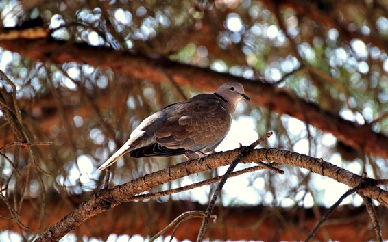 Papéis de Parede Uma posição pássaro no ramo de árvore