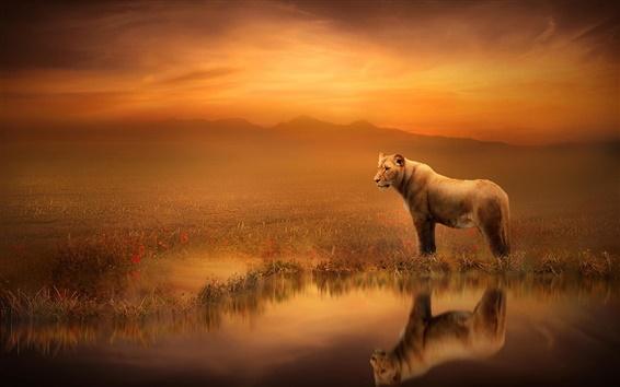 Fond d'écran Images d'art, lionne, crépuscule, réflexion de l'eau
