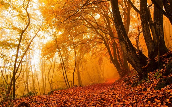 Wallpaper Autumn nature, forest, trees, leaves, colors, path