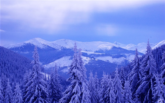 Wallpaper Cold winter, sky, clouds, mountains, trees, spruce, thick snow