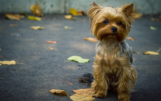 Wallpaper Cute dog front view, leaves