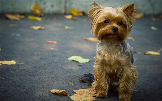 Fondos de pantalla Vista frontal lindo perro, hojas