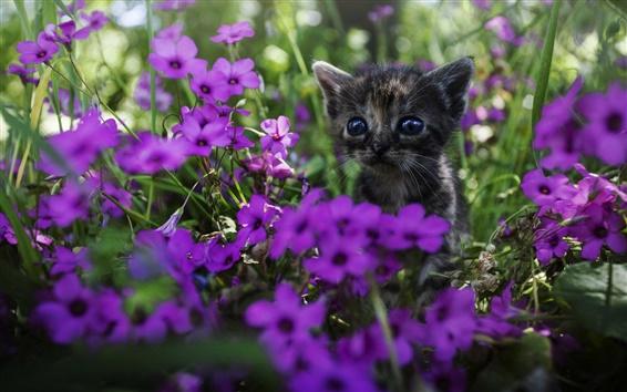 Papéis de Parede Gatinho bonito, flores roxas