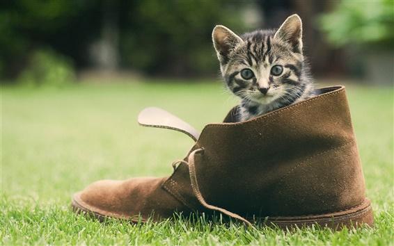 Обои Милый котенок, обувь, зеленая трава