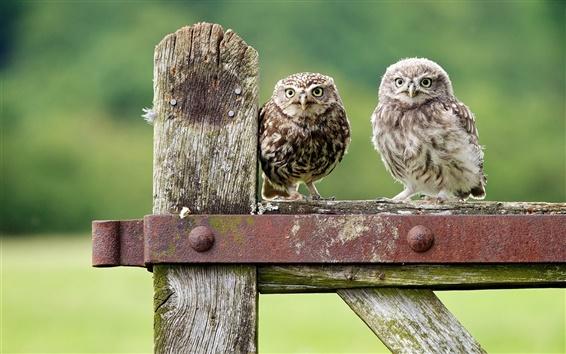 Обои Симпатичные совы, зеленый боке