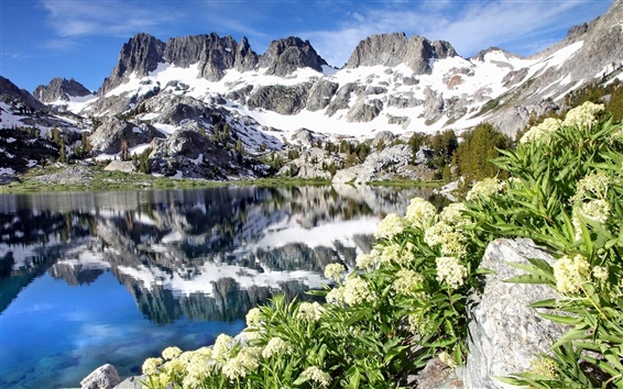 Wallpaper Ediza Lake, Ansel Adams Wilderness, California, USA, flowers, mountains