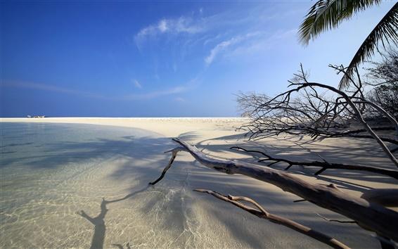 Обои Embudu, Мальдивские о-ва, океан, пляж, песок, ветки