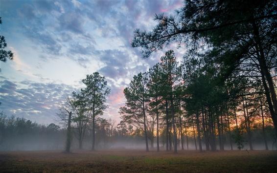 Fond d'écran Forêt, coucher de soleil, brouillard