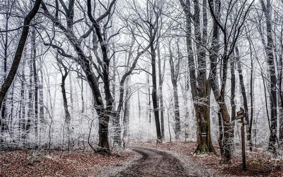 Fond d'écran Forêt, arbres, route, gel automnal