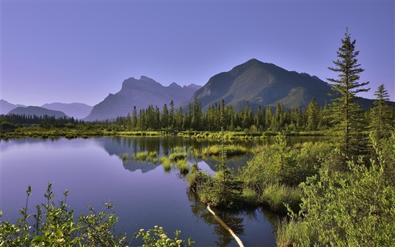 Wallpaper Lake, mountains, trees