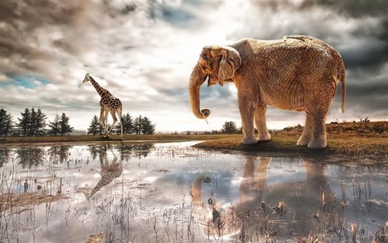 Fond d'écran Lac, réflexion de l'eau, l'éléphant, la girafe, rivière
