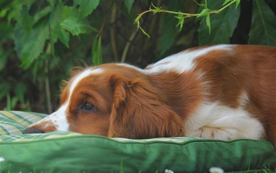 壁紙 自然、犬、悲しみ