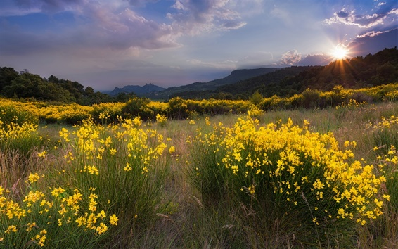Wallpaper Nature landscape, meadow, yellow flowers, grass, sunset, mountains
